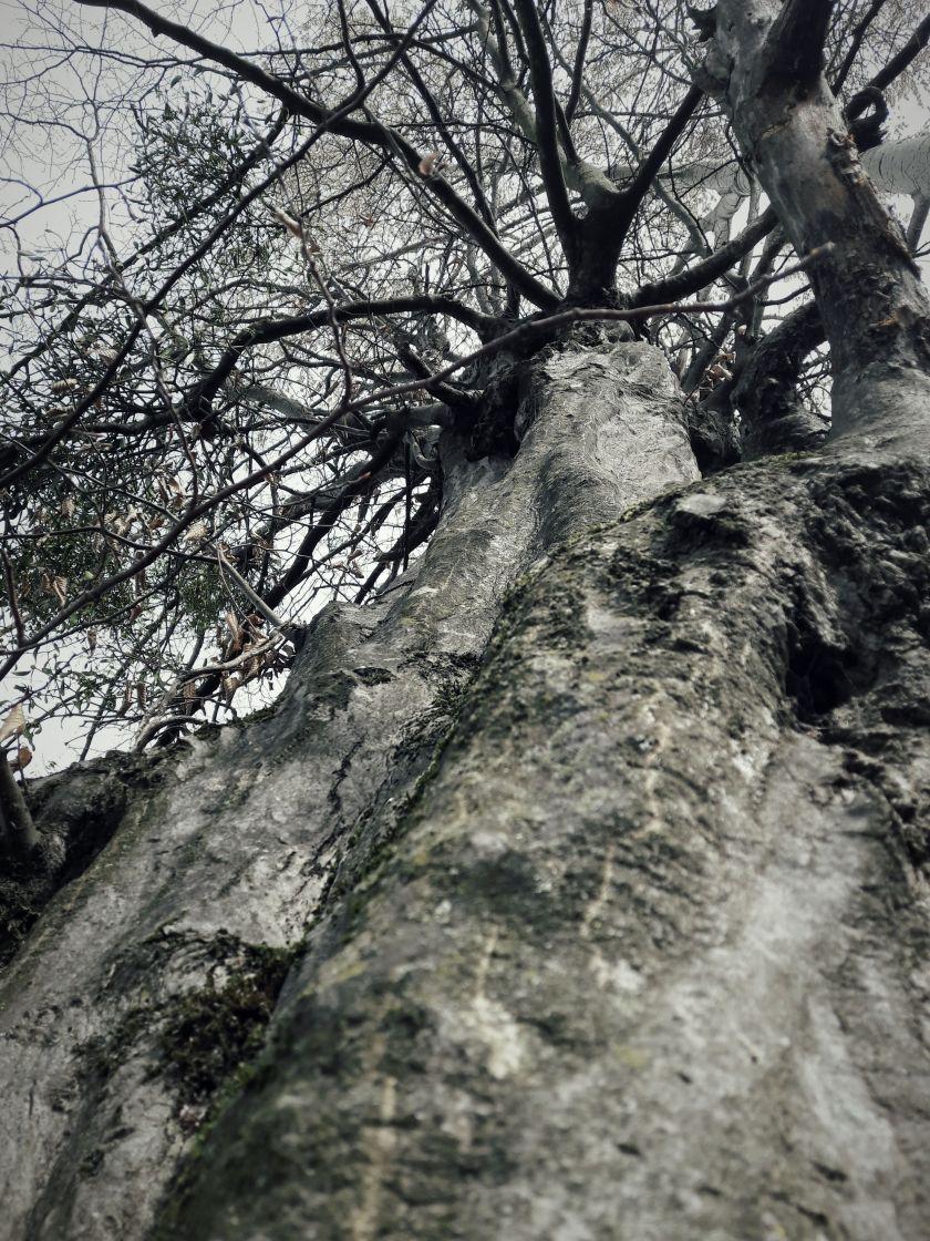 poesie-photographie-tracesdusouffle-retour