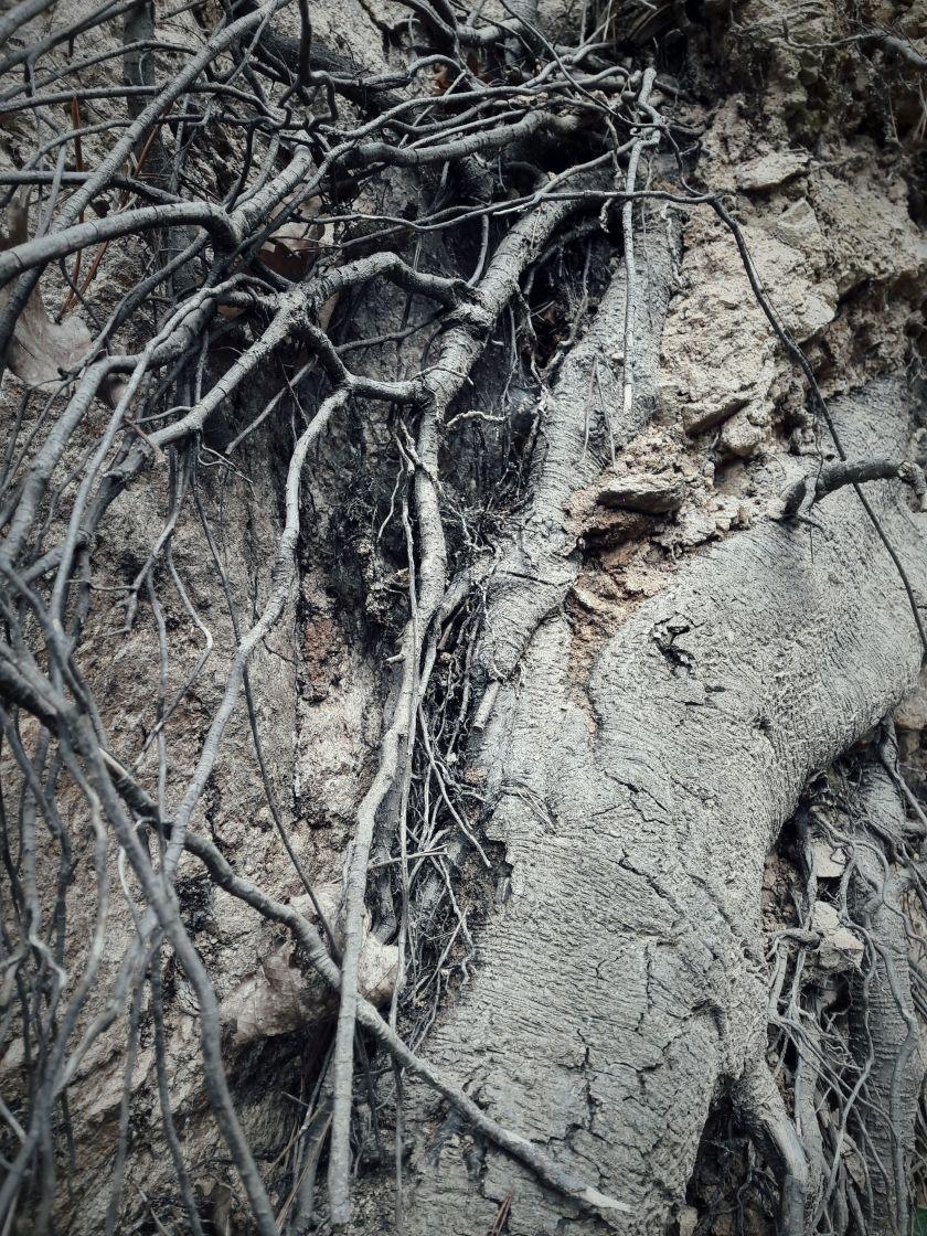poésie-photographie-tracesdusouffle-racines-au-vent.jpg