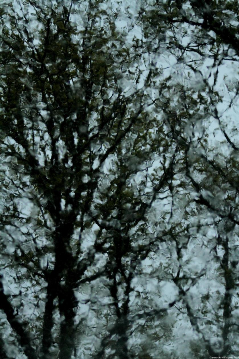 photographie-poesie-tracesdusouffle-pluie.JPG
