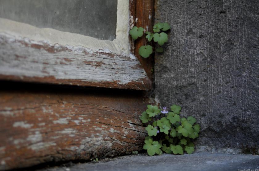 poesie-photographie-tracesdusouffle-premier_pas.JPG