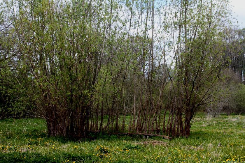 poesie-photographie-tracesdusouffle-refuge.JPG