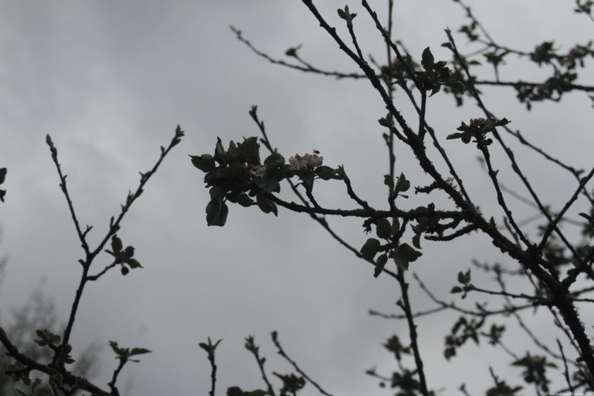 poesie-photographie-tracesdusouffle-orage.JPG