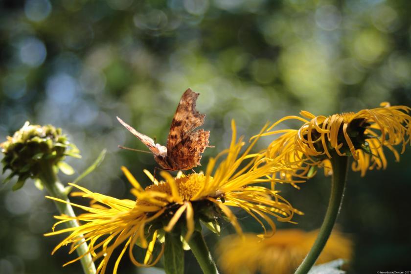photographie-poesie-tracesdusouffle-germination.JPG