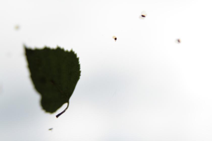 photographie-poesie-tracedusouffle-creature.JPG