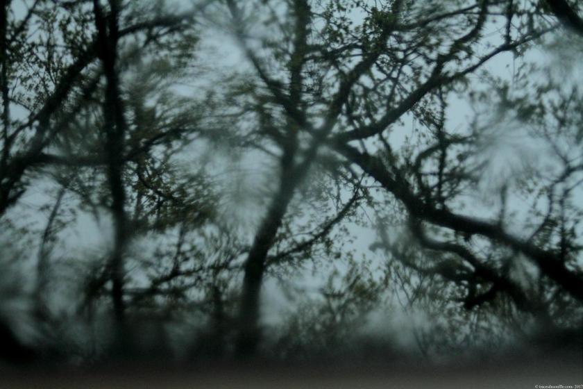 poésie-photograhie-tracesdusouffle-nuit au jardin.JPG