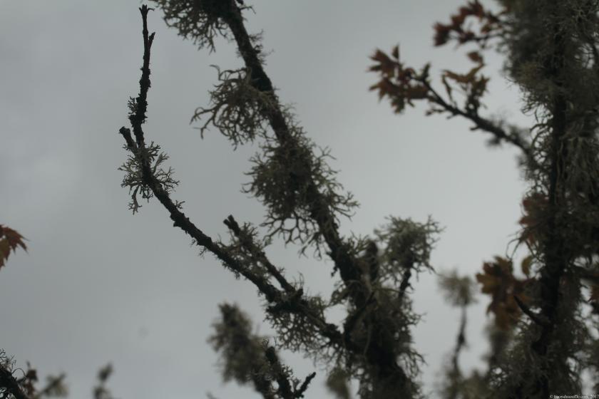poesie-photographie-tracedusouffle-tristesse.JPG