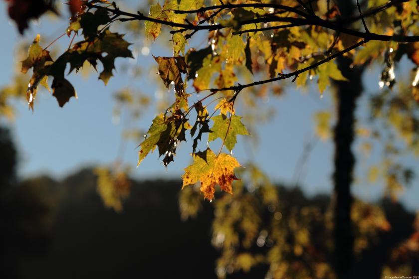 poesie-photographie-tracesdusouffle-automne.JPG