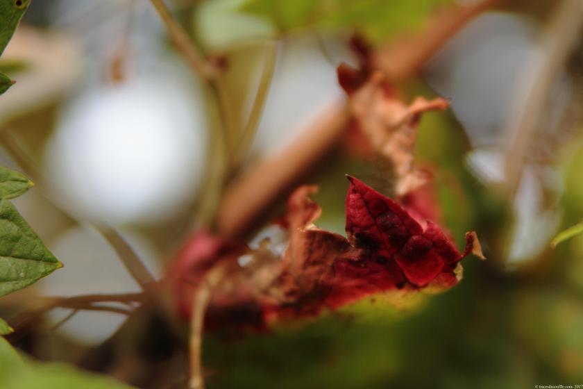poesie-photographie-tracesdusouffle-final.JPG