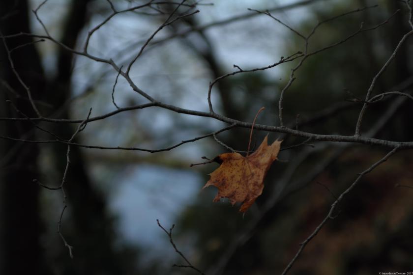 poesie-photographie-tracesdusouffle-temps.JPG