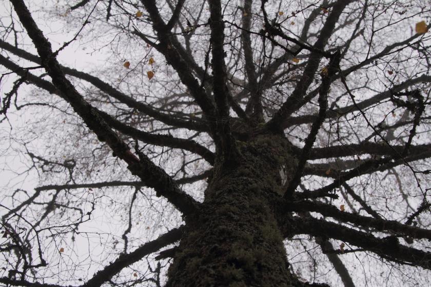 poésie-photographie-tracesdusouffle-marie-anne-schonfeld-gratitude.JPG