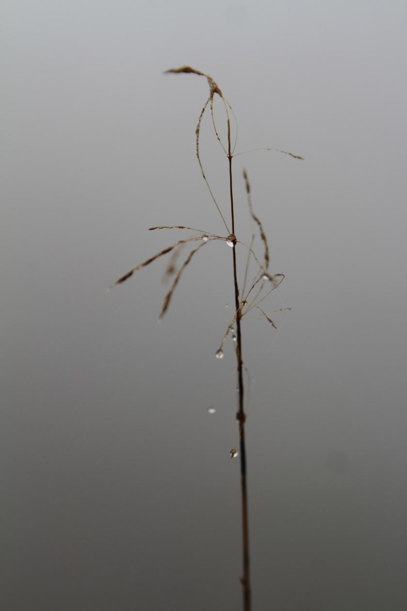 poésie-photographie-tracesdusouffle-marie-anne-schonfeld-brin.JPG