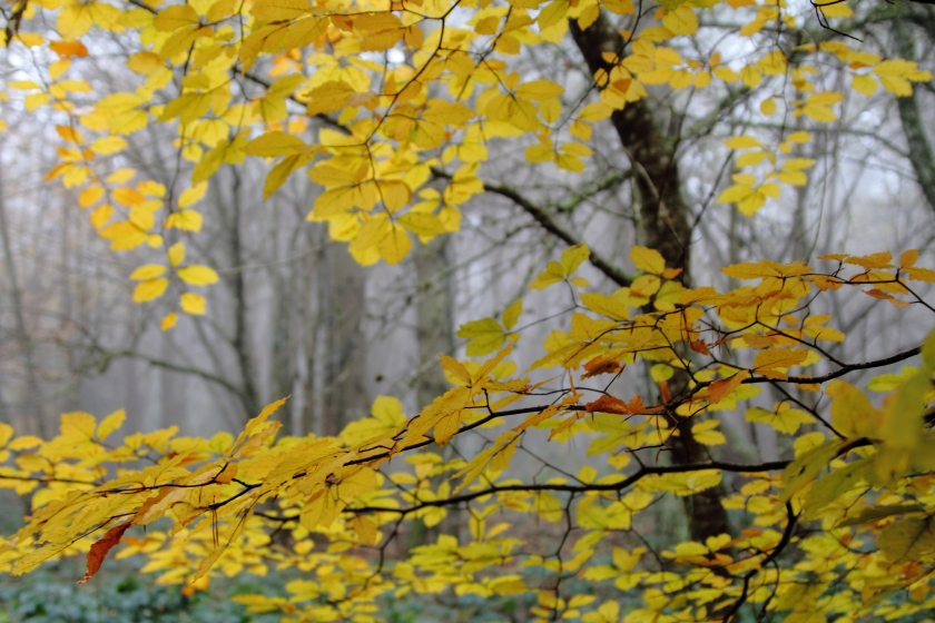 poésie-photographie-tracesdusouffle-marie-anne-schonfeld-chemin.JPG