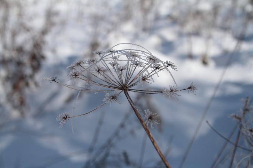 poesie-photographie-tracesdusouffle-marie-anne-schonfeld--reliée.JPG