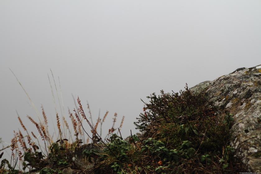 poesie-photographie-tracesdusouffle-marie-anne-schonfeld- ronde vive.JPG