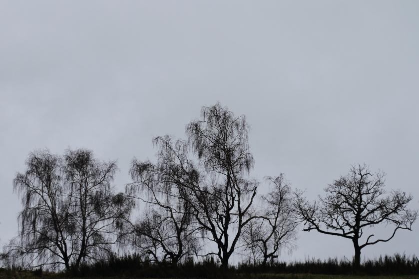 poesie-photographie-tracesdusouffle-marie-anne-schonfeld-hiver.JPG