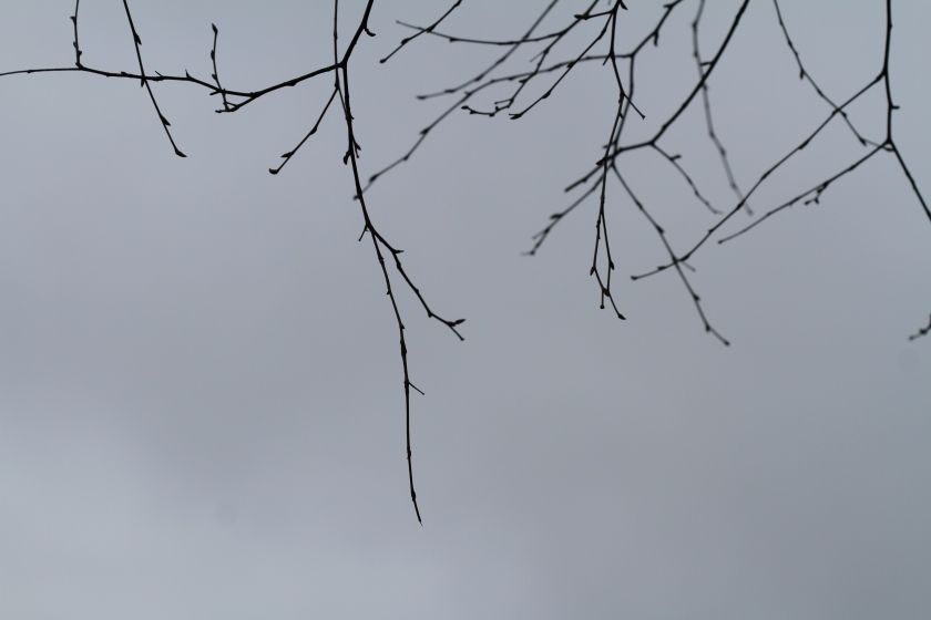 poesie-photographie-tracesdusouffle-marie-anne-schonfeld-felure.JPG