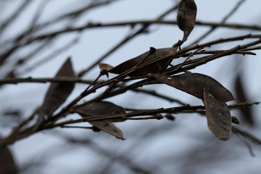 poesie-photographie-tracesdusouffle-marie-anne-schonfeld-intranquille.JPG