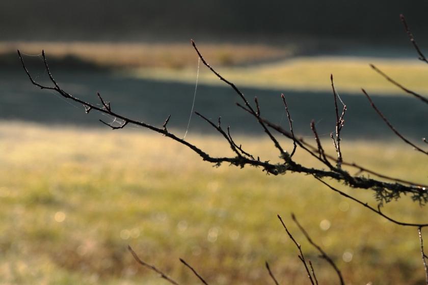 poesie-photographie-tracesdusouffle-marie-anne-schonfeld- apaisement.JPG