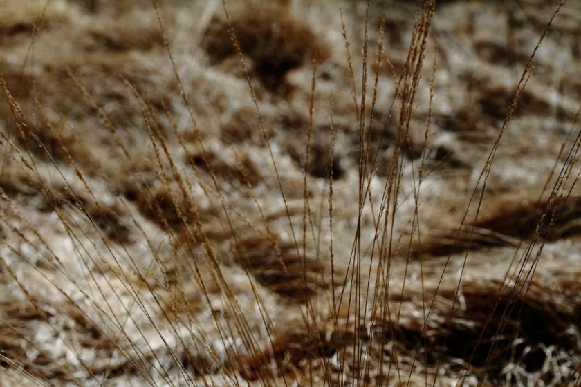 poesie-photographie-tracesdusouffle-marie-anne-schonfeld-silence.JPG