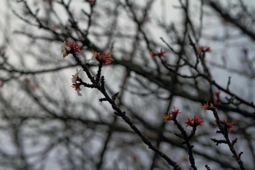 poesie-photographie-marie-anne-schonfeld-tracesdusouffle-egarement.JPG