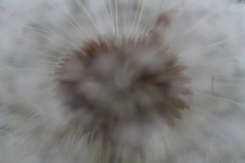 poesie-photographie-tracesdusouffle-marie-anne-schonfeld-disparition