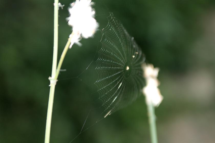 poesie-photographie-tracesdusouffle-marie-anne-schonfeld-liens.JPG