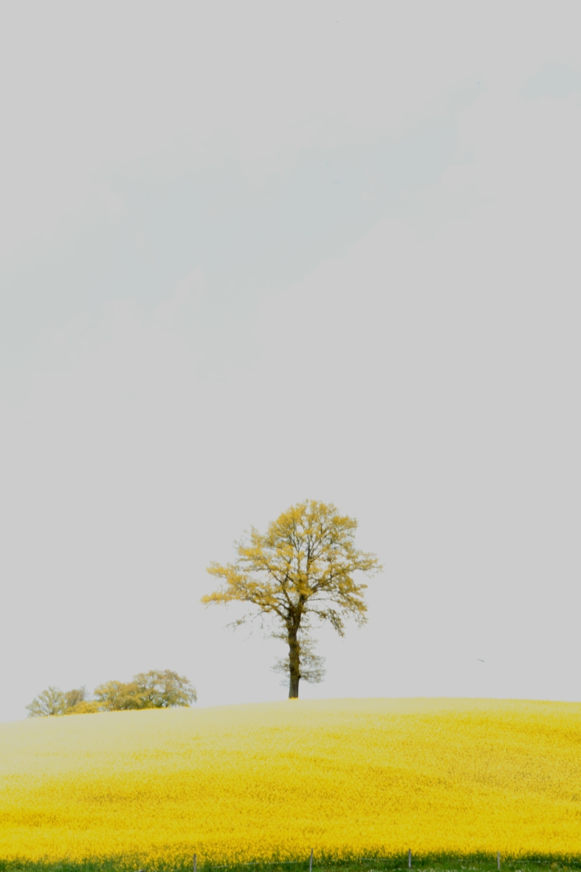 poesie-photographie-tracesdusouffle-marie-anne-schonfeld-rencontre.JPG