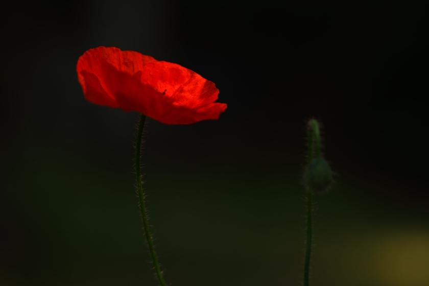 poesie-photographie-tracesdusouffle-marie-anne-schonfeld-lueur.JPG