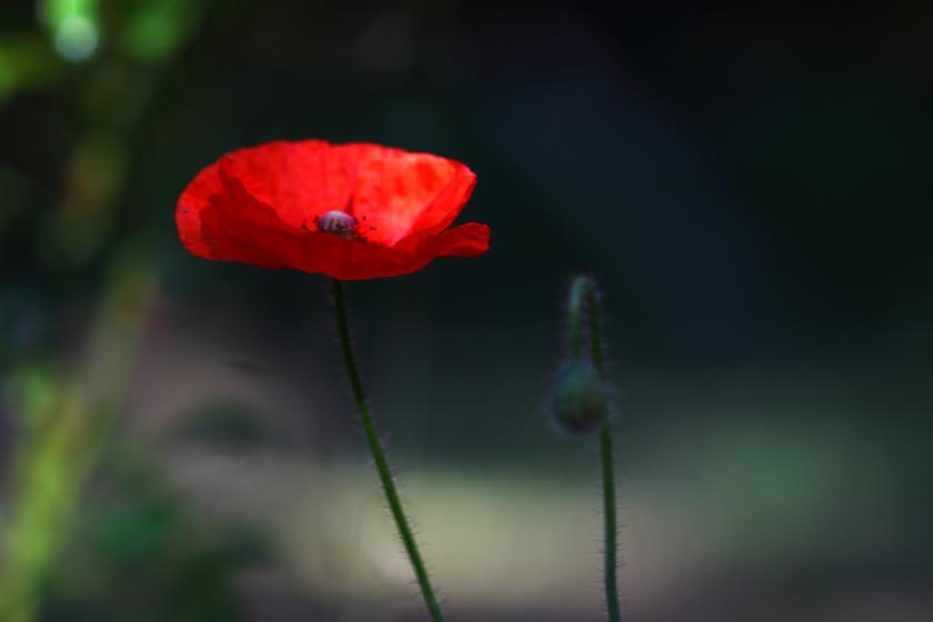 poesie-photographie-marie-anne-schonfeld-tracesdusouffle-rupture.JPG